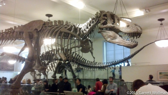 Big dinosaur skeletons